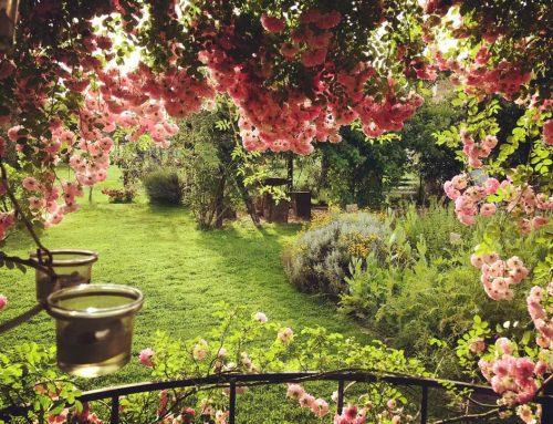 Profumi e sapori del giardino Officinale